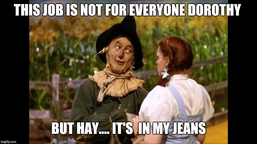 wizard of oz scarecrow | THIS JOB IS NOT FOR EVERYONE DOROTHY BUT HAY.... IT'S  IN MY JEANS | image tagged in wizard of oz scarecrow | made w/ Imgflip meme maker