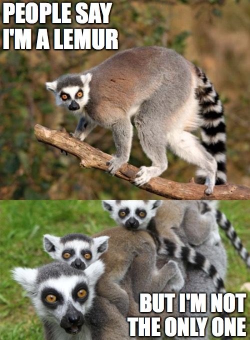 multiple lemurs | PEOPLE SAY I'M A LEMUR BUT I'M NOT THE ONLY ONE | image tagged in imagine,john lennon,lemur,animals | made w/ Imgflip meme maker