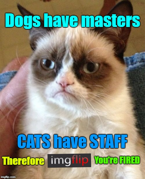 "Us cats don't need no damn ""CATS STREAM"" I'm staying right here, on the general page. 