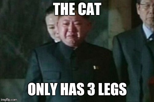 Kim Jong Un Sad Meme | THE CAT ONLY HAS 3 LEGS | image tagged in memes,kim jong un sad | made w/ Imgflip meme maker