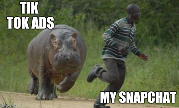 hippo chase memes