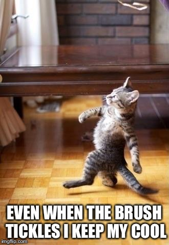 Cool Cat Stroll Meme | EVEN WHEN THE BRUSH TICKLES I KEEP MY COOL | image tagged in memes,cool cat stroll | made w/ Imgflip meme maker