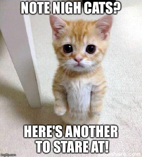 Cute Cat | NOTE NIGH CATS? HERE'S ANOTHER TO STARE AT! | image tagged in memes,cute cat | made w/ Imgflip meme maker
