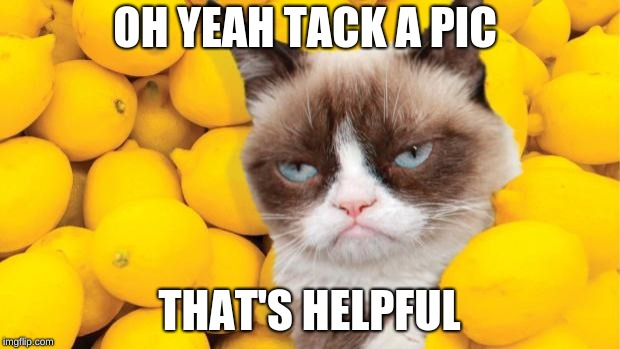 Grumpy Cat lemons | OH YEAH TACK A PIC THAT'S HELPFUL | image tagged in grumpy cat lemons | made w/ Imgflip meme maker