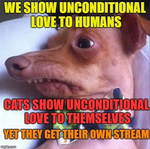 Tuna the dog (Phteven) | WE SHOW UNCONDITIONAL LOVE TO HUMANS CATS SHOW UNCONDITIONAL LOVE TO THEMSELVES YET THEY GET THEIR OWN STREAM | image tagged in tuna the dog phteven | made w/ Imgflip meme maker