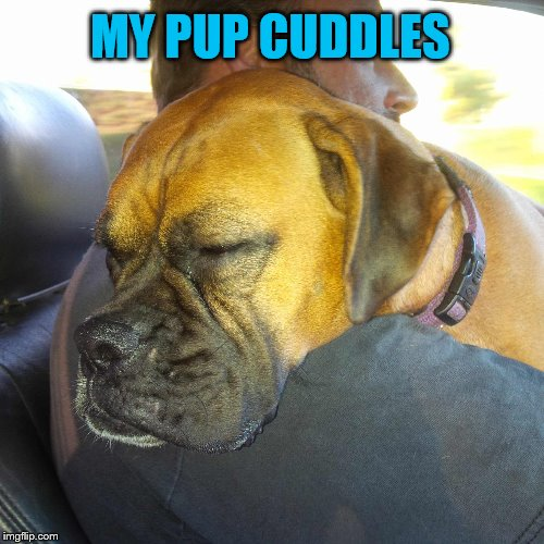 MY PUP CUDDLES | made w/ Imgflip meme maker
