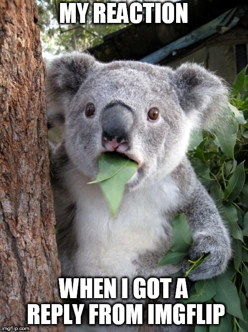 And he even replied a second time when I replied to his reply | MY REACTION WHEN I GOT A REPLY FROM IMGFLIP | image tagged in memes,surprised koala,imgflip | made w/ Imgflip meme maker