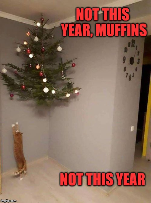 Not this year, not again! | NOT THIS YEAR, MUFFINS NOT THIS YEAR | image tagged in funny,christmas,cat,christmas tree | made w/ Imgflip meme maker