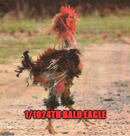 1/1024TH BALD EAGLE | image tagged in rooster,elizabeth warren,indian,native american | made w/ Imgflip meme maker