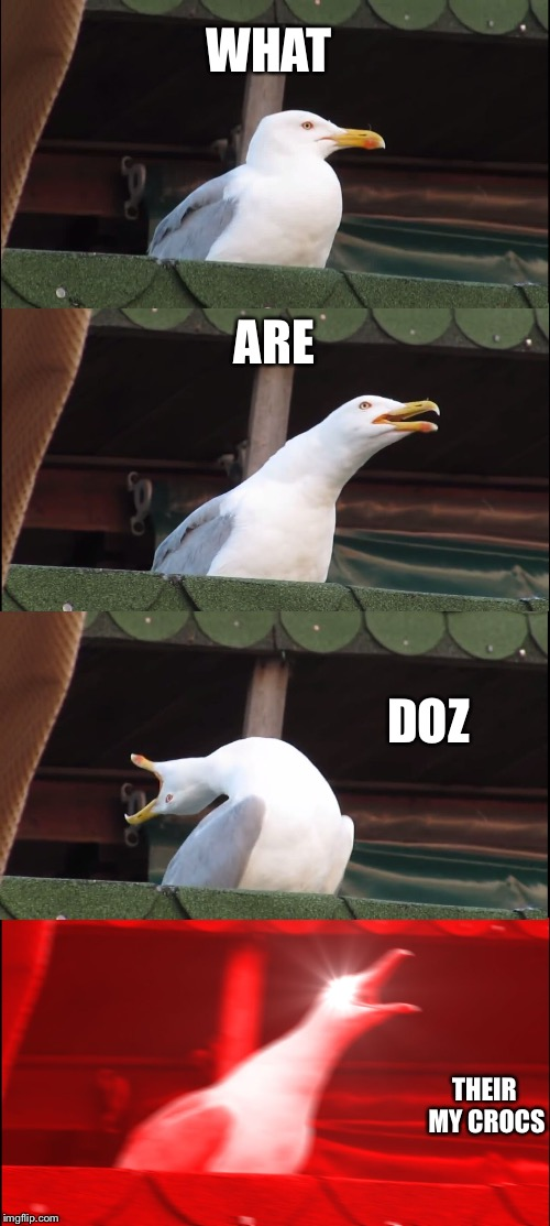 Wrong stream #freethememes | WHAT ARE DOZ THEIR MY CROCS | image tagged in memes,inhaling seagull | made w/ Imgflip meme maker