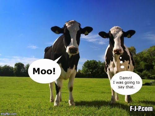 I've been doing cow memes lately | image tagged in cow,cows,moo | made w/ Imgflip meme maker