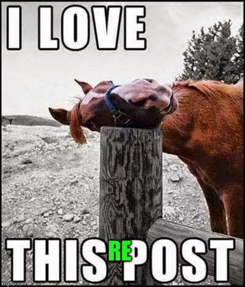 I love this repost! |  RE | image tagged in memes,repost,horse | made w/ Imgflip meme maker