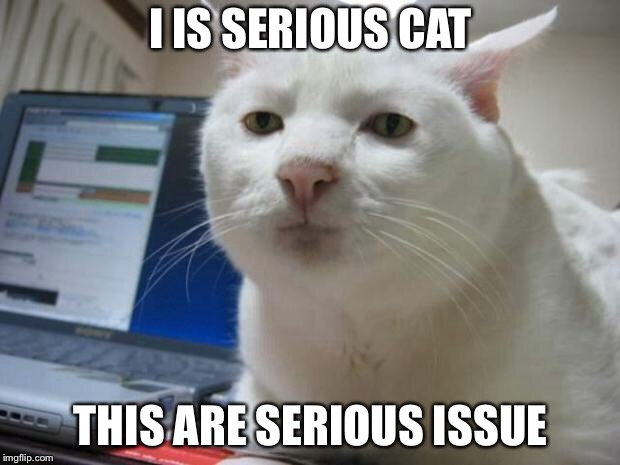 serious cat | I IS SERIOUS CAT THIS ARE SERIOUS ISSUE | image tagged in serious cat | made w/ Imgflip meme maker