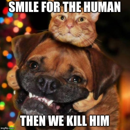 dogs an cats | SMILE FOR THE HUMAN THEN WE KILL HIM | image tagged in dogs an cats | made w/ Imgflip meme maker
