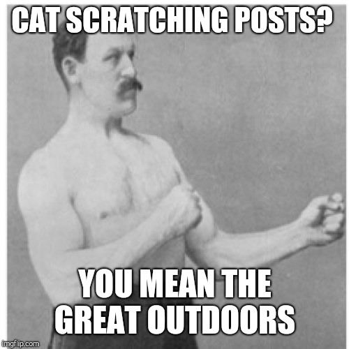 Overly Manly Man Meme | CAT SCRATCHING POSTS? YOU MEAN THE GREAT OUTDOORS | image tagged in memes,overly manly man | made w/ Imgflip meme maker