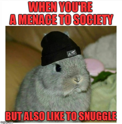 The Latest Hare Style | image tagged in adorable,bunny/hare,stylin' | made w/ Imgflip meme maker