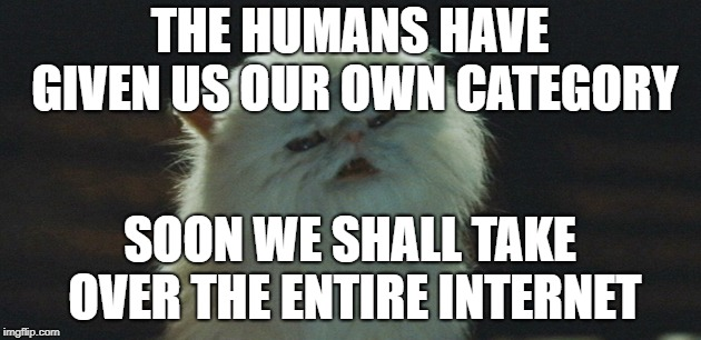 Where will this madness end??? | THE HUMANS HAVE GIVEN US OUR OWN CATEGORY SOON WE SHALL TAKE OVER THE ENTIRE INTERNET | image tagged in dogs an cats,funny cats,world domination | made w/ Imgflip meme maker