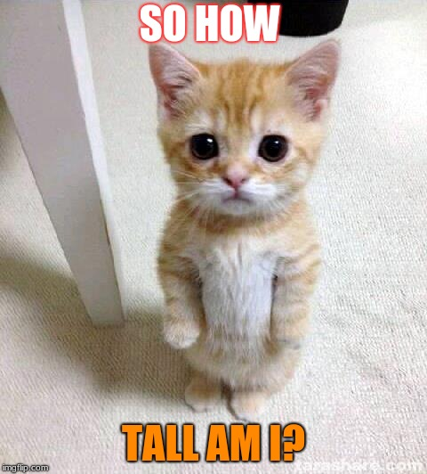 Cute Cat | SO HOW TALL AM I? | image tagged in memes,cute cat | made w/ Imgflip meme maker