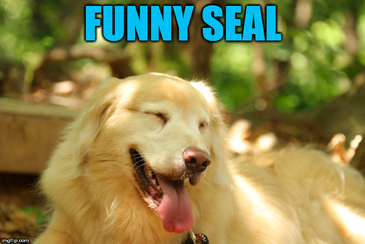 Dog laughing | FUNNY SEAL | image tagged in dog laughing | made w/ Imgflip meme maker