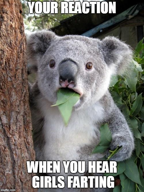 Surprised Koala | YOUR REACTION WHEN YOU HEAR GIRLS FARTING | image tagged in memes,surprised koala | made w/ Imgflip meme maker