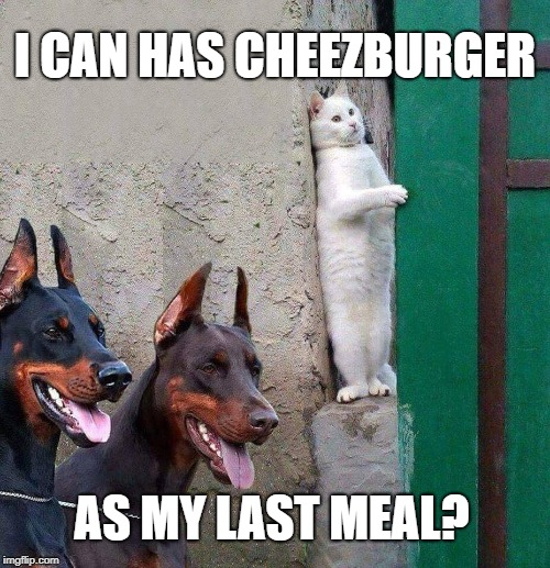 I CAN HAS CHEEZBURGER AS MY LAST MEAL? | image tagged in lolcats,cats,funny cats,dogs an cats | made w/ Imgflip meme maker