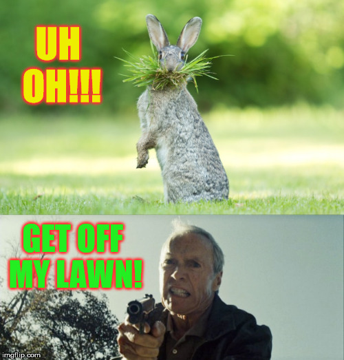 ...or I'll make rabbit stew out of you! | UH OH!!! GET OFF MY LAWN! | image tagged in memes,get off my lawn,rabbit,clint eastwood | made w/ Imgflip meme maker