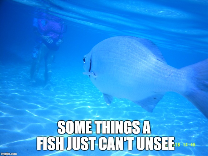 SOME THINGS A FISH JUST CAN'T UNSEE | image tagged in pda,underwater,bad memory fish | made w/ Imgflip meme maker