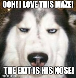 OOH! I LOVE THIS MAZE! THE EXIT IS HIS NOSE! | made w/ Imgflip meme maker