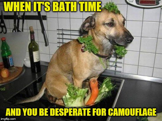 It was a nice try. | WHEN IT'S BATH TIME AND YOU BE DESPERATE FOR CAMOUFLAGE | image tagged in memes,dogs,bath time,camouflage | made w/ Imgflip meme maker