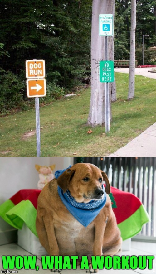 Dogs will be pooped from post to post (instead of peeing) | WOW, WHAT A WORKOUT | image tagged in dog,sign,trail,pipe_picasso,fat dog | made w/ Imgflip meme maker