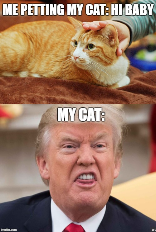 Image Tagged In Donald Trumpcatsrepublicansmemes Imgflip
