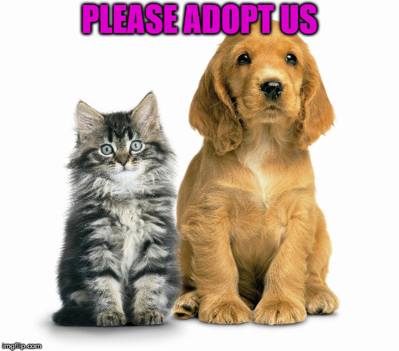 Adopt from your local shelter. | PLEASE ADOPT US | image tagged in mother's day  pets animals cats dogs adoption | made w/ Imgflip meme maker