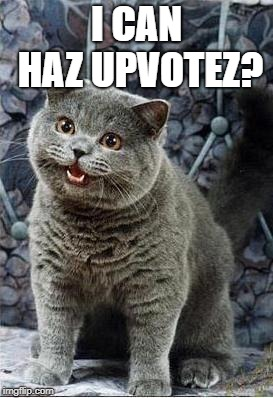 I can has cheezburger cat | I CAN HAZ UPVOTEZ? | image tagged in i can has cheezburger cat | made w/ Imgflip meme maker