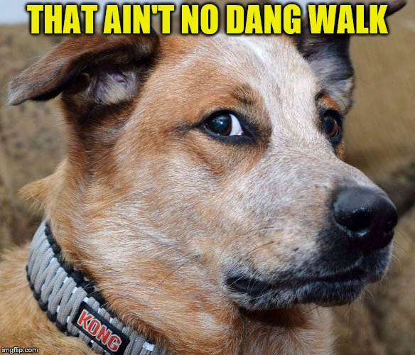 THAT AIN'T NO DANG WALK | made w/ Imgflip meme maker