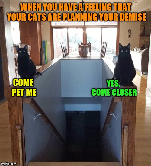 Did I forget to buy the right type of cat food? | WHEN YOU HAVE A FEELING THAT YOUR CATS ARE PLANNING YOUR DEMISE COME PET ME YES, COME CLOSER | image tagged in memes,cats,evil,staircase,plotting your death | made w/ Imgflip meme maker