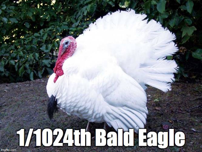Bunch of turkeys in office | 1/1024th Bald Eagle | image tagged in turkey,white | made w/ Imgflip meme maker
