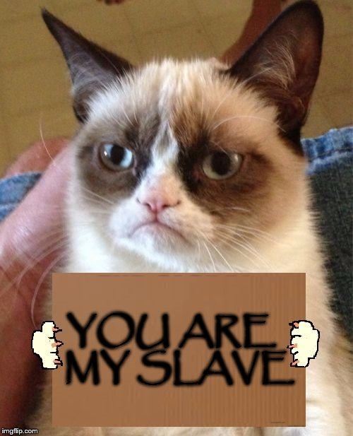 Grumpy Cat Cardboard Sign | YOU ARE  MY SLAVE | image tagged in grumpy cat cardboard sign | made w/ Imgflip meme maker