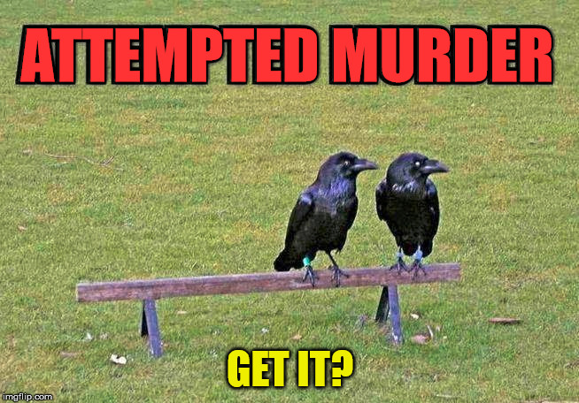 Crows in a group of three or more is called a MURDER. | ATTEMPTED MURDER GET IT? | image tagged in memes,crow,murder,play on words,funny,double meaning | made w/ Imgflip meme maker