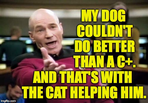 Picard Wtf Meme | MY DOG COULDN'T DO BETTER THAN A C+. AND THAT'S WITH THE CAT HELPING HIM. | image tagged in memes,picard wtf | made w/ Imgflip meme maker