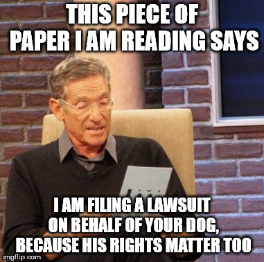 THIS PIECE OF PAPER I AM READING SAYS I AM FILING A LAWSUIT ON BEHALF OF YOUR DOG, BECAUSE HIS RIGHTS MATTER TOO | image tagged in memes,maury lie detector | made w/ Imgflip meme maker