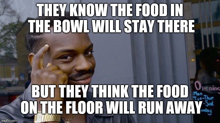 Roll Safe Think About It Meme | THEY KNOW THE FOOD IN THE BOWL WILL STAY THERE BUT THEY THINK THE FOOD ON THE FLOOR WILL RUN AWAY | image tagged in memes,roll safe think about it | made w/ Imgflip meme maker