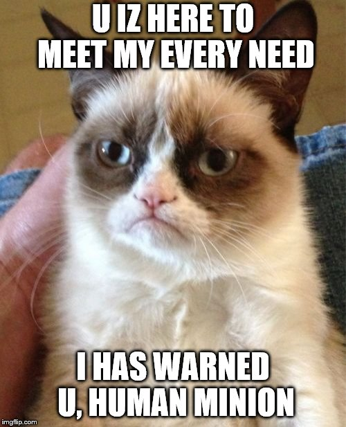 Grumpy Cat | U IZ HERE TO MEET MY EVERY NEED I HAS WARNED U, HUMAN MINION | image tagged in memes,grumpy cat | made w/ Imgflip meme maker