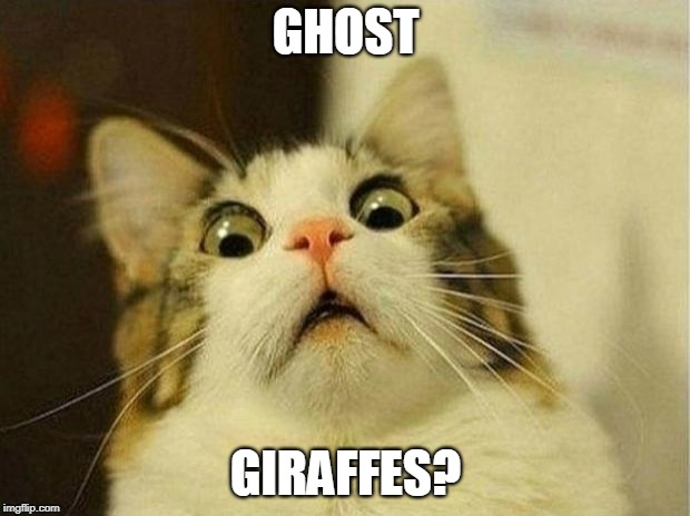 Scared Cat Meme | GHOST GIRAFFES? | image tagged in memes,scared cat | made w/ Imgflip meme maker