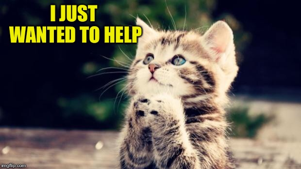 Cute kitten | I JUST WANTED TO HELP | image tagged in cute kitten | made w/ Imgflip meme maker