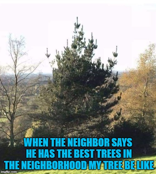 Trees have feelings too you know. |  WHEN THE NEIGHBOR SAYS HE HAS THE BEST TREES IN THE NEIGHBORHOOD MY TREE BE LIKE | image tagged in tree flipping the bird,memes,trees,funny,flipping the bird | made w/ Imgflip meme maker