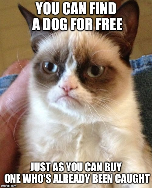 Grumpy Cat Meme | YOU CAN FIND A DOG FOR FREE JUST AS YOU CAN BUY ONE WHO'S ALREADY BEEN CAUGHT | image tagged in memes,grumpy cat | made w/ Imgflip meme maker
