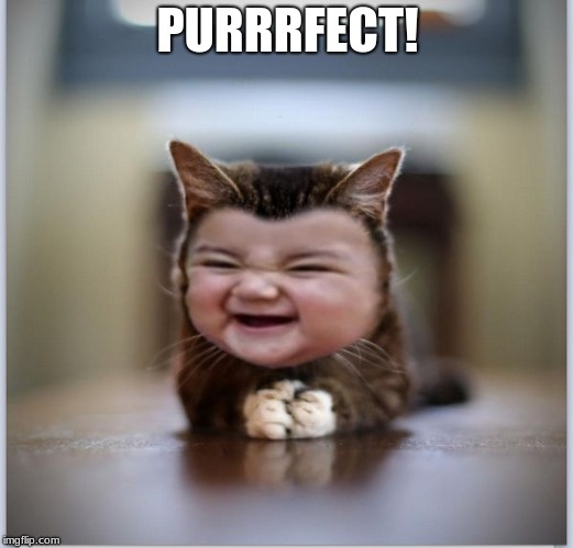 evil toddler kitten | PURRRFECT! | image tagged in evil toddler kitten | made w/ Imgflip meme maker