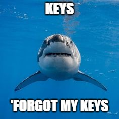 KEYS 'FORGOT MY KEYS | image tagged in shark,shark week,great white shark,keys | made w/ Imgflip meme maker