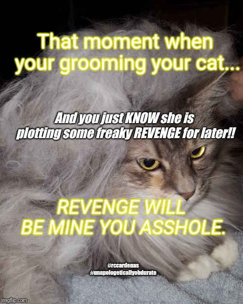 Revenge Cat | That moment when your grooming your cat... And you just KNOW she is plotting some freaky REVENGE for later!! #rccardenas #unapologeticallyob | image tagged in cats,funny cat memes,humor,funny memes,funny meme,pets | made w/ Imgflip meme maker