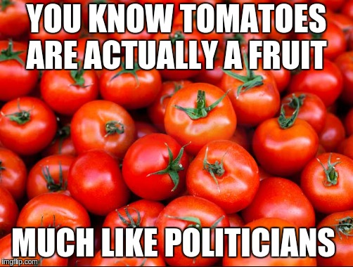 fruit cocktail   | YOU KNOW TOMATOES ARE ACTUALLY A FRUIT MUCH LIKE POLITICIANS | image tagged in funny,fruit,gmo fruits vegetables | made w/ Imgflip meme maker